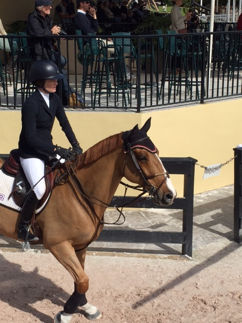 Adult amateur drive equestrian owner